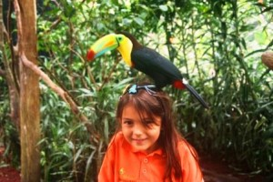 You can hold a toucan