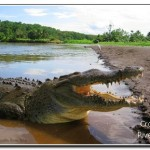 Crocodile River Tour